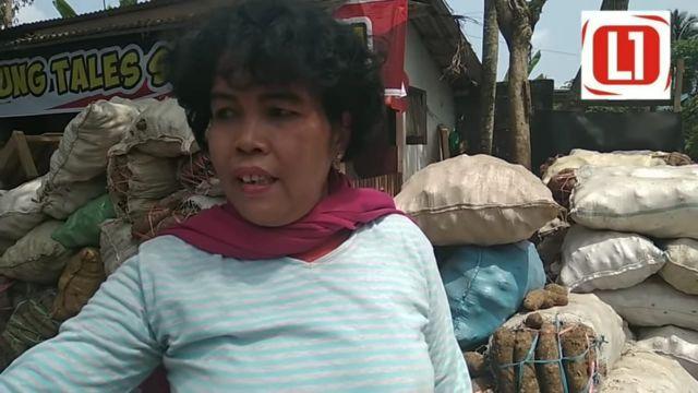 Video Sukses Bisnis  Milyaran Supplier Ratu Talas Lumajang