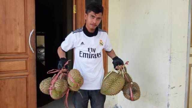 Durian Montong Semeru Lumajang Mulai Diburu