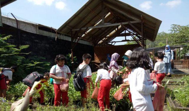 Siswa SDN Jogotrunan Belajar Bertani di Wisata Edukasi Alas Semeru