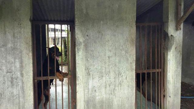 Polres Lumajang Akan Gunakan Anjing Ganas Buru Maling Sapi