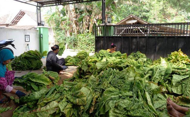 APTI Lumajang Kawal Pencairan BLT DBHCHT Buruh Tani Tembakau