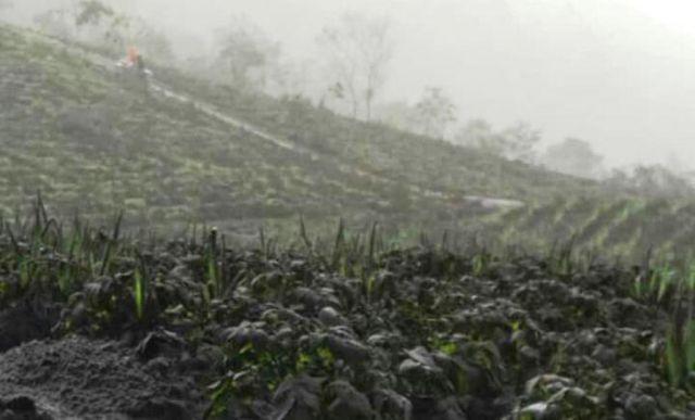 Dua Desa di Lumajang Mulai Rasakan Hujan Abu Vulkanik Bromo