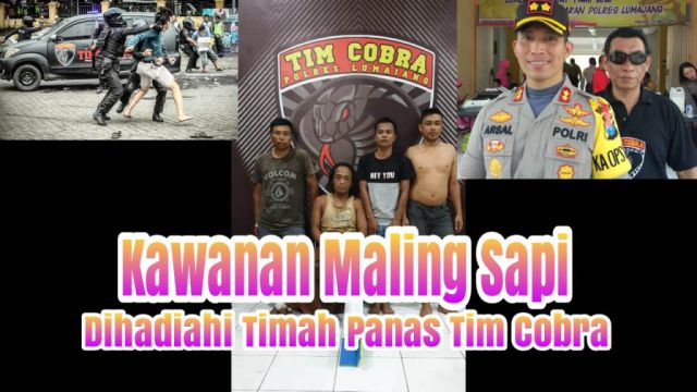 Video : Tim Cobra Tembak Komplotan Maling Sapi Selok Anyar