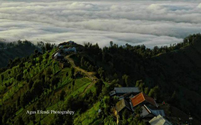 Yuk...! Intip Upacara Adat Unan Unan di Desa Nirwana Lumajang
