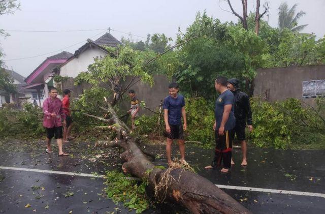 Tertimpa Pohon Tumbang di Banjarwaru Lumajang Satu Pemotor Meninggal