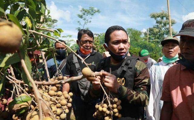 Cak Thoriq Panen Perdana Buah Kelengkeng Asli Jokarto Lumajang