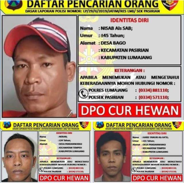 Inilah Wajah 3 DPO Maling Sapi Buronan Polres Lumajang