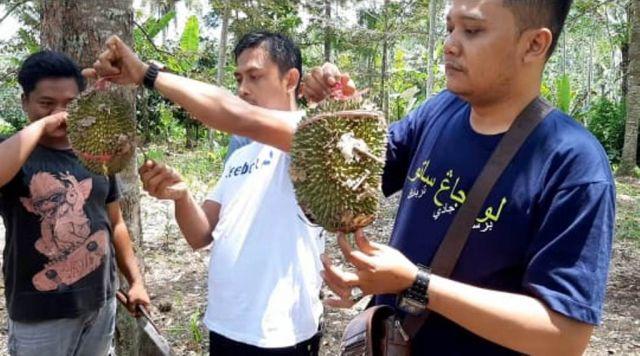 Durian Mentega Semeru di Kertosari Lumajang Rasanya Bikin Nagihin