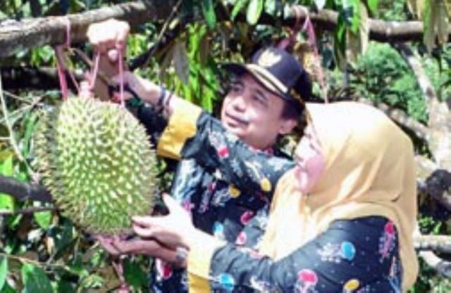 Hemm..! Yuk Hadiri Kontes dan Bazar Durian di KWT Lumajang