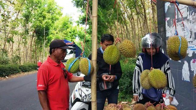 Mulai Musim, Hemm...!! Enaknya Durian Bajol Khas Senduro-Lumajang