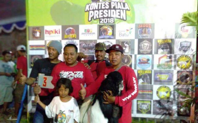 Kambing Etawa Senduro Lumajang Berjaya di Kontes Piala Presiden 2018