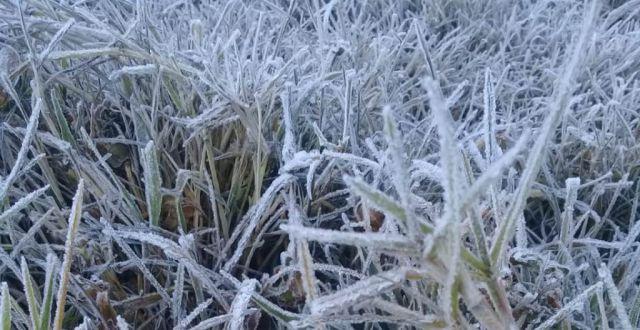 Kilauan Frost Flowers Sambut Wisatawan Ranupani Lumajang