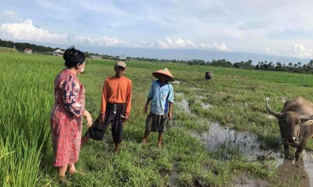HPL Minta Pemerintah Perhatikan Sektor Pertanian Dimasa Pandemi Covid