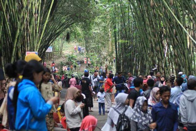 Hutan Bambu Jadi Magnet Wisata Alam Lumajang