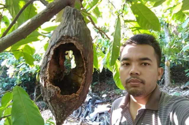 Diserbu Tupai, Kakau dan Durian Tempursari Gagal Panen