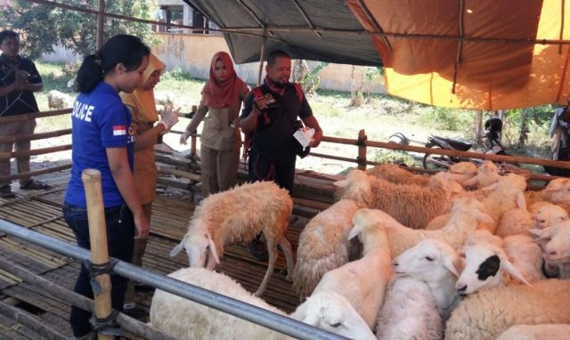 Dijual Dipinggir Jalan, Banyak Kambing Qurban Sakit Mata