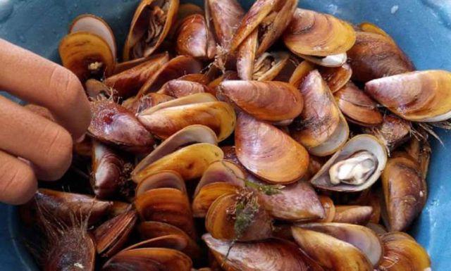 Lezatnya Karangan Sampir Khas Pantai Selatan Lumajang