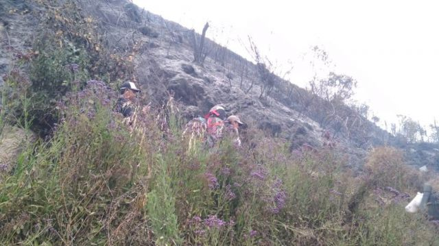 Alami Kebakaran Hebat, Pendakian Semeru dan Ranu Kombolo Ditutup Total