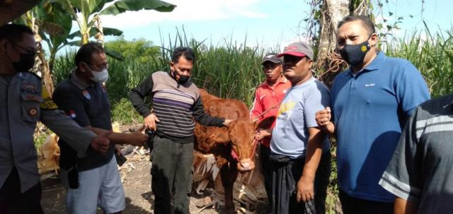 Kawanan Maling Mulai Beraksi Curi Sapi di Kebonsari Lumajang