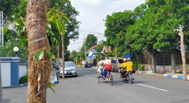 Pohon Klampok Darsono di Jalan Sutoyo Lumajang Banyak yang Mati
