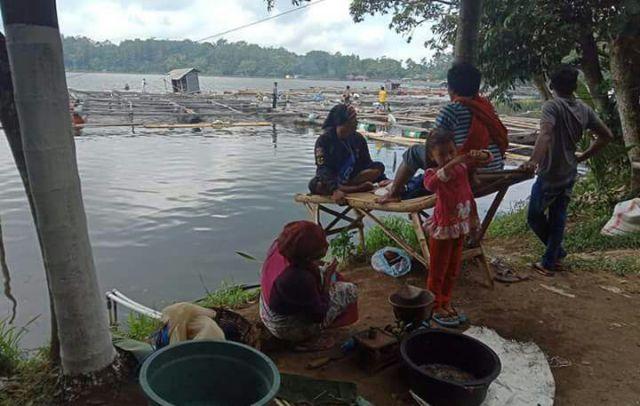 Ranu Klakah Mulai Koyo, Banyak Ikan dan Udang Mabuk