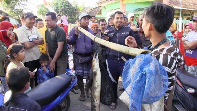 Warga Tangkap Ikan Uling Raksasa di Ranupakis Lumajang