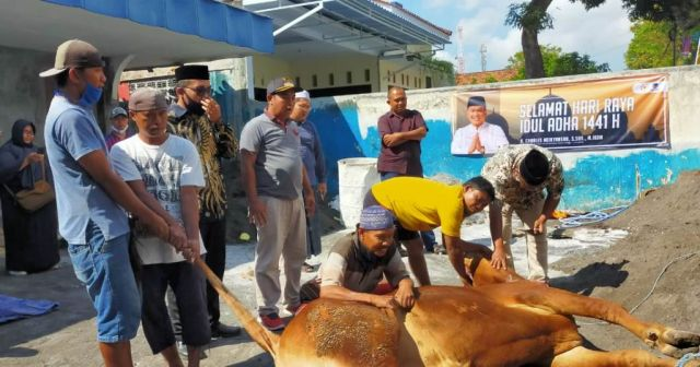 H. Charles DPR RI Serahkan 2 Ekor Sapi Kurban ke DPD NasDem Lumajang