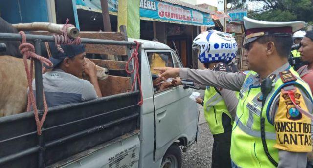 Satlantas Lumajang Tilang Mobil Bak Terbuka Angkut Orang dan Sapi