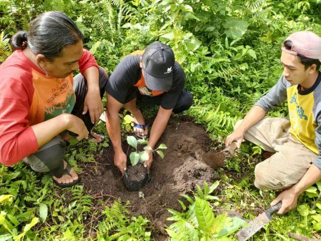 Laskar Hijau Tanam Pohon Buah Langka di Lereng Lemongan Lumajang