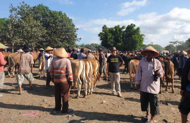 Transaksi di Pasar Hewan Lumajang Mencapai Miliaran Rupiah