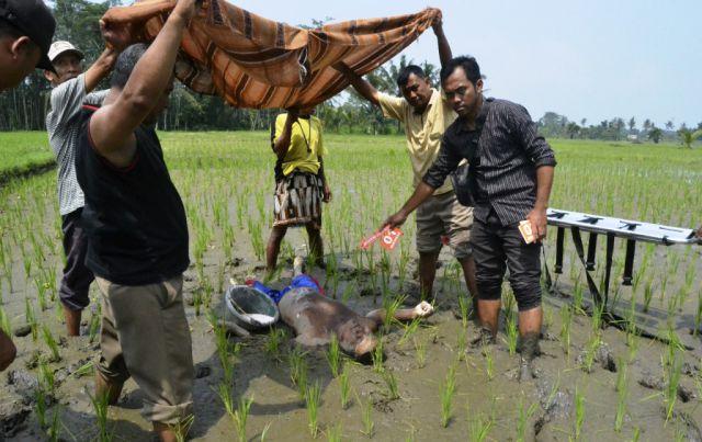 Petani Lumajang Ditemukan Meninggal di Tengah Sawah
