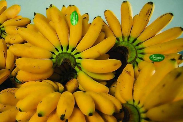 Pasar Pisang Mas Kirana Lumajang Terimbas Covid 19 Hingga 60 Persen