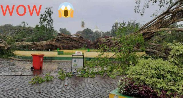 Pohon Beringin Alun Alun Lumajang Tumbang, Ada Pertanda Apa.?