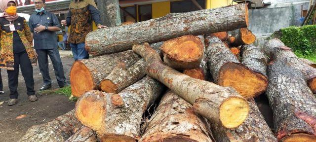 Polisi Serahkan Kasus Penebangan Pohon Peneduh ke Satpol PP Lumajang