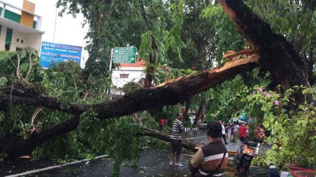 Deddy DPRD Lumajang Minta DLH Segera Tebang Pohon Rawan Tumbang
