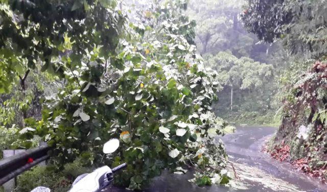 Hujan Deras, Satu Pohon Tumbang di Jalur Piket Nol