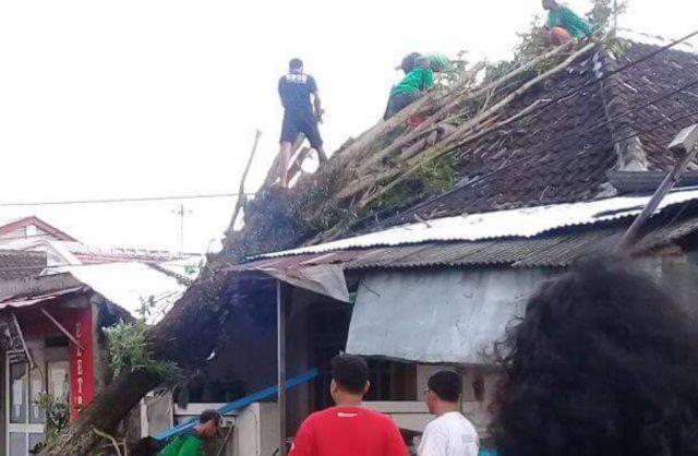 Angin Kencang Tumbangkan Puluhan Pohon di Lumajang