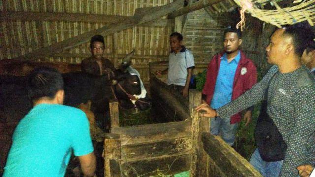Satgas Keamanan Desa Bersama Polisi Gagalkan Pencurian 3 Sapi di Ranuwurung