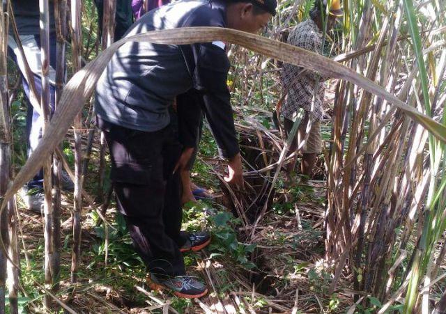 Heboh, Tanah di Ladang Tebu Desa Umbul Amblas