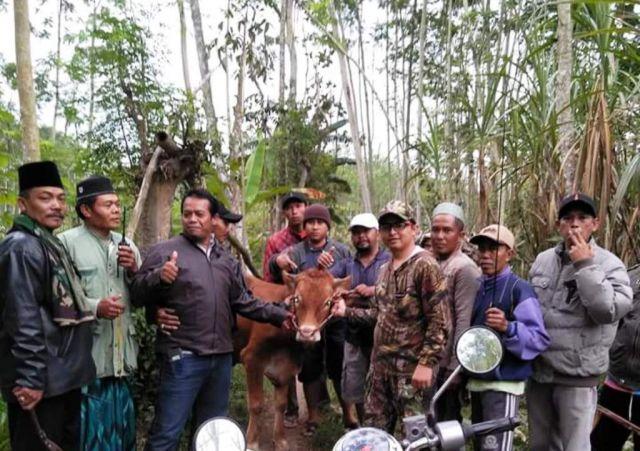 Dalam Semalam, 2 Desa Kawasan Selatan Diobok-0bok Bandit Maling Sapi