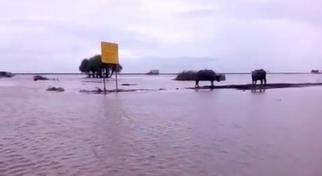 Padang Savana Pandawangi Lumajang Terendam Air Pasang