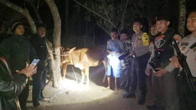 Tim Cobra dan SKD Gagalkan Pencurian 2 Sapi di Desa Tegalbangsri Ranuyoso