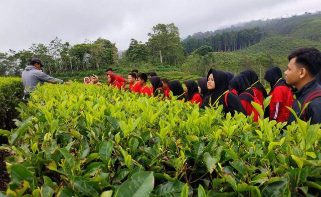 Puluhan Siswa Berwisata di Taman Rekreasi Kebun Teh Kertowono