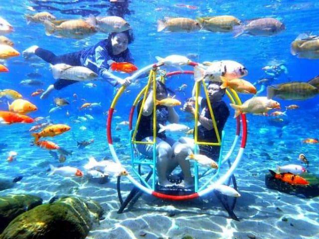 Tirtosari View Cocok Untuk Kalian yang Ingin Menyelam Bersama Ikan Tapi Takut Kedalaman Laut
