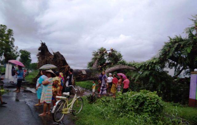 Pohon Berumur Ratusan Tahun Icon Dusun Laspoleng Lumajang Tumbang