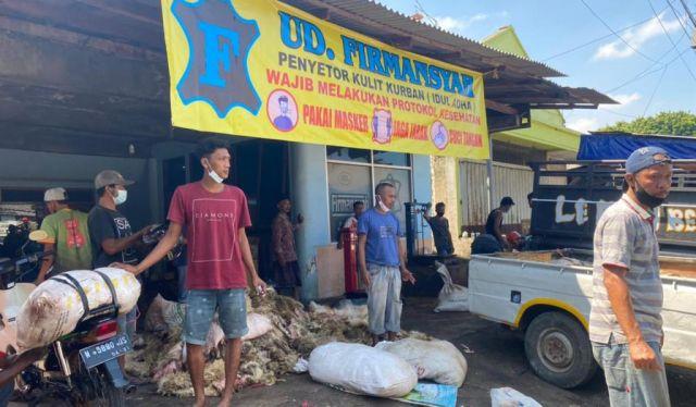 Ribuan Kulit Hewan Qurban Disetor ke UD Firmansyah Lumajang