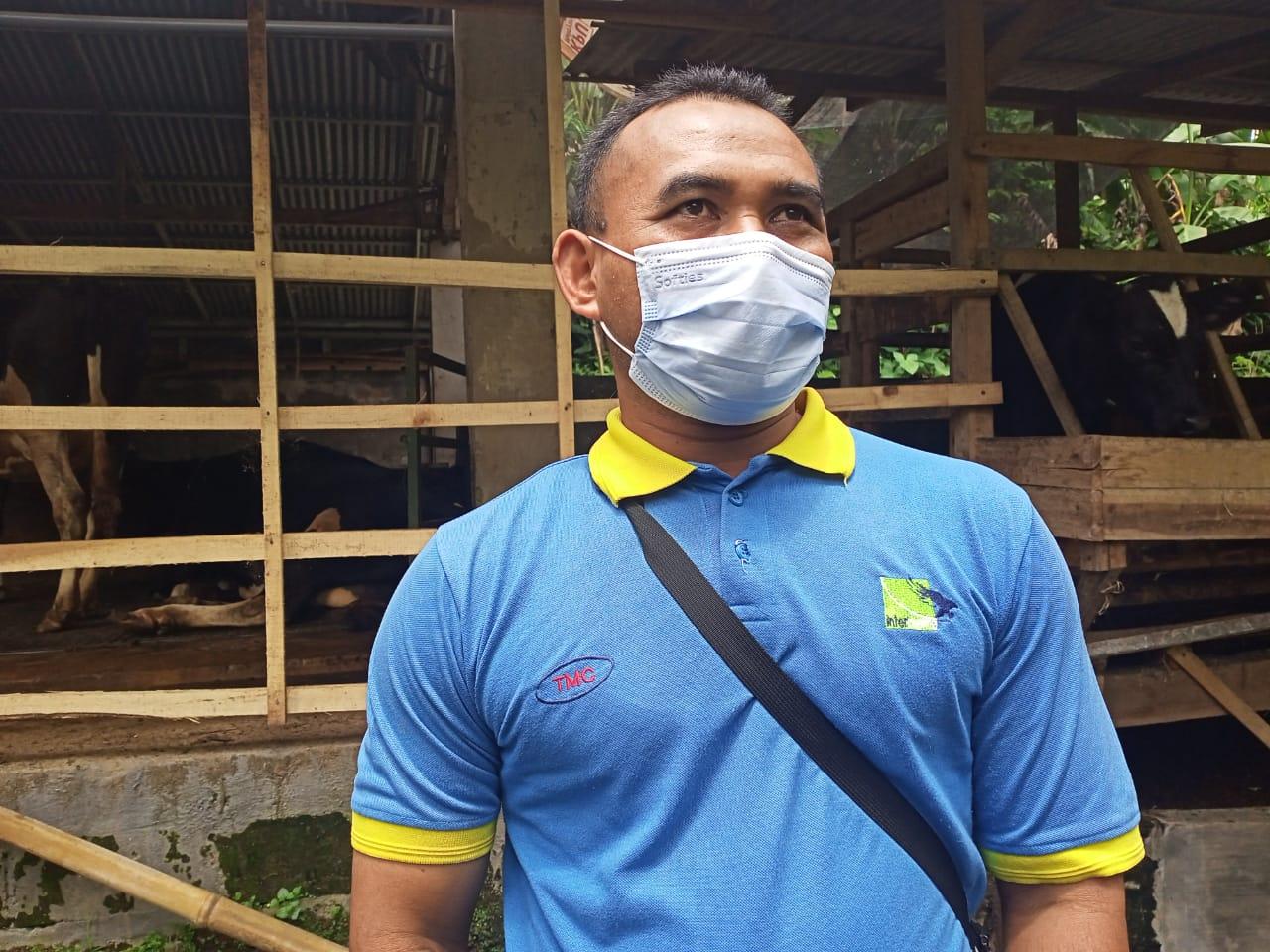 Peluang Usaha Susu Sapi Perah Lumajang di Tengah Pandemi