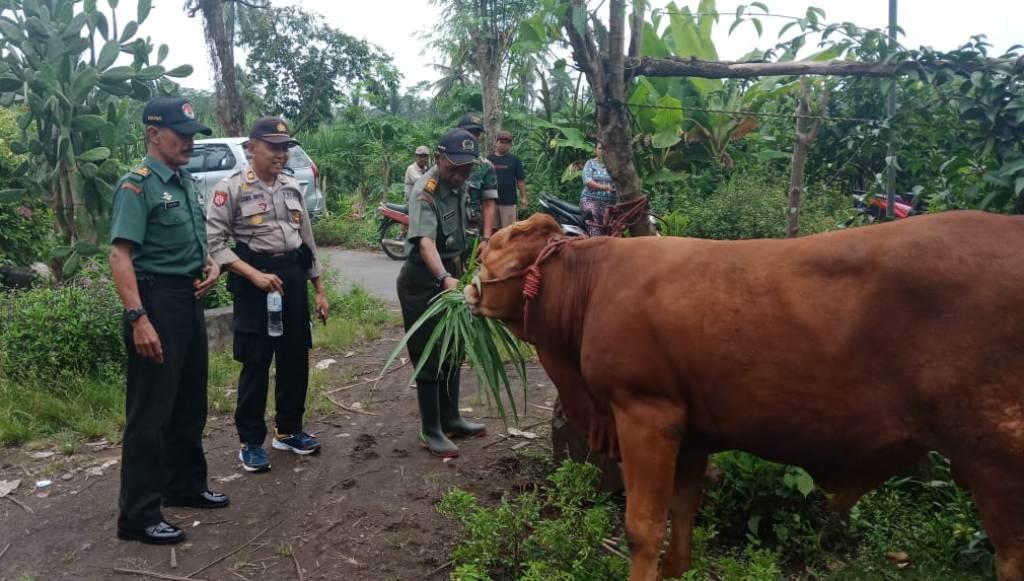 Lumajang Selatan Diteror Maling Sapi Polisi Kerahkan Anjing Pelacak