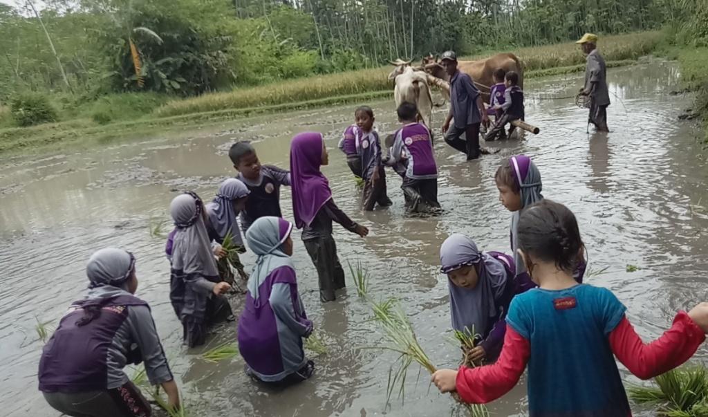 Siswa TK Cahaya Al-Qur'an Belajar Membajak Sawah di Wisata Edukasi Alas Semeru